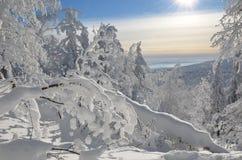 Paisaje nevoso del invierno Imagen de archivo libre de regalías