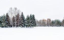 Paisaje nevoso del invierno Fotos de archivo libres de regalías