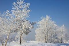Paisaje nevoso hermoso del invierno Imagen de archivo libre de regalías