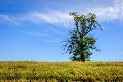 Paisaje noruego con el solo árbol Foto de archivo