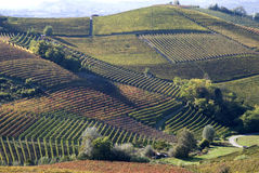 Paisaje otoñal de vides y de colinas en Langhe Fotografía de archivo