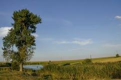 Paisaje otoñal del campo con el árbol y el lago en el área de Ludogorie Imagen de archivo libre de regalías