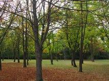 Paisaje otoñal, hojas secadas en un parque en día nublado foto de archivo