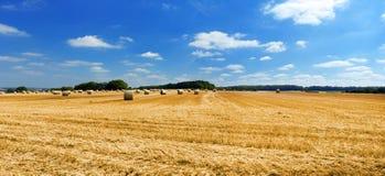 Paisaje pacífico con los campos y el cielo del centeno Foto de archivo libre de regalías