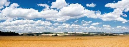 Paisaje pacífico del verano con los campos del centeno Fotos de archivo