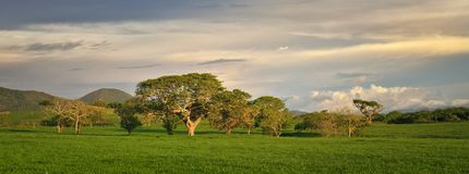 Paisaje panorámico con los árboles y las montañas en México Imagenes de archivo