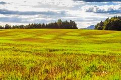 Paisaje panorámico de colinas de color verde amarillo coloridas con el camino de tierra, el cielo azul y las nubes Imagen de archivo libre de regalías