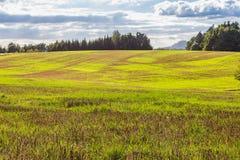 Paisaje panorámico de colinas de color verde amarillo coloridas con el camino de tierra, el cielo azul y las nubes Fotos de archivo libres de regalías