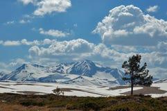 Paisaje panorámico de la montaña con el árbol Fotos de archivo
