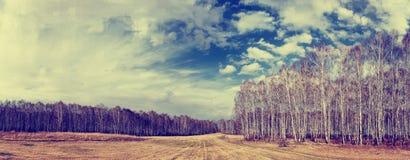 Paisaje panorámico de la primavera con el bosque del abedul Fotografía de archivo libre de regalías