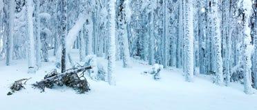 Paisaje panorámico del bosque del invierno después de la ventisca Fotografía de archivo