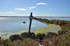 Paisaje pantanoso Foto de archivo libre de regalías