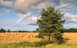 Paisaje pastoral con el árbol de pino y rollos del pajar Fotografía de archivo