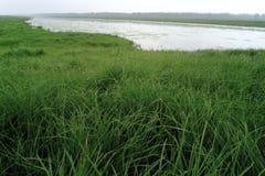 Paisaje: Pastos y ríos de HNatural Imágenes de archivo libres de regalías
