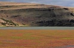 Paisaje patagón. imagen de archivo