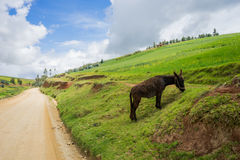 Paisaje peruano del paisaje Foto de archivo