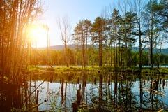 Paisaje pintoresco del verano - bosque mezclado en el santo Vera Island en el lago Turgoyak, Urales meridionales, Rusia Imágenes de archivo libres de regalías