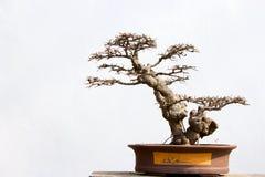 Paisaje potted chino Fotografía de archivo libre de regalías