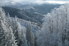 Paisaje prístino del invierno Fotos de archivo libres de regalías