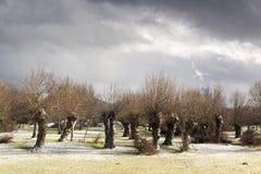 Paisaje primaveral, en Segovia, España de Bosque Imagenes de archivo