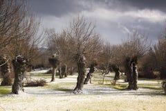 Paisaje primaveral, en Segovia, España del carretera y Bosque del en del vehÃculo Imagen de archivo