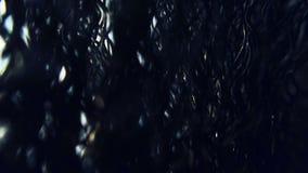 Paisaje quemado misterioso oscuro del bosque del bosque extranjero asustadizo almacen de metraje de vídeo
