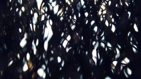 Paisaje quemado misterioso oscuro del bosque del bosque extranjero asustadizo almacen de video