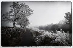 Paisaje-río Suir del invierno Foto de archivo