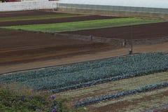 Paisaje rústico Campos de los granjeros Imagen de archivo