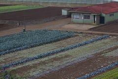 Paisaje rústico Campos de los granjeros Fotografía de archivo
