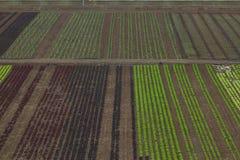 Paisaje rústico Campos de los granjeros Foto de archivo libre de regalías