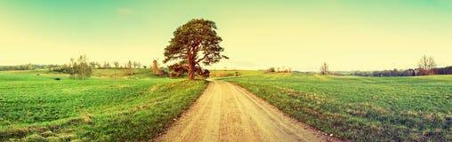 Paisaje rústico con el pino y el molino de viento solos en horizonte Imagen de archivo libre de regalías