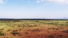 Paisaje a?reo del prado de la sabana del desierto de la cantidad en el parque nacional de Serengeti Viaje del safari a trav?s del almacen de video