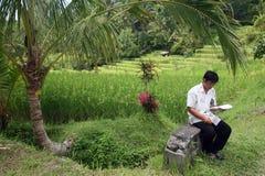 PAISAJE RICEFIELD DE ASIA INDONESIA BALI Imagen de archivo
