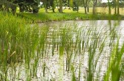 Paisaje ripícola del lago imagen de archivo