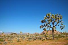 Paisaje rocoso del desierto Imágenes de archivo libres de regalías