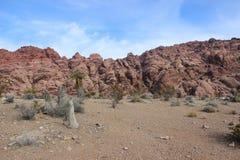 Paisaje rojo del desierto del barranco de la roca de Arizona Imagen de archivo