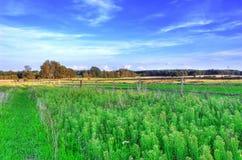 Paisaje rural. Foto de archivo