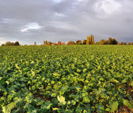 Paisaje rural bajo los cielos nublados Fotos de archivo