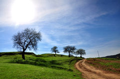 Paisaje rural, camino y árbol Fotografía de archivo