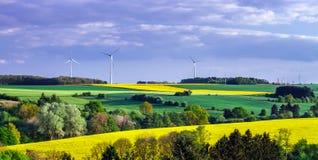 Paisaje rural colorido con los campos amarillos del bittercress Imagen de archivo libre de regalías