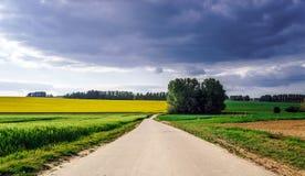 Paisaje rural colorido con los campos amarillos del bittercress Foto de archivo libre de regalías