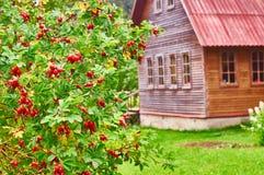 Paisaje rural con el arbusto del briar fotografía de archivo libre de regalías