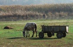 Paisaje rural con el caballo y la madera Fotografía de archivo libre de regalías