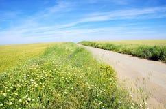 Paisaje rural con el camino de tierra Imagenes de archivo