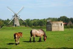 Paisaje rural con el molino de viento y los caballos. imagen de archivo libre de regalías