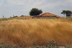 Paisaje rural con la alta hierba amarilla fotos de archivo