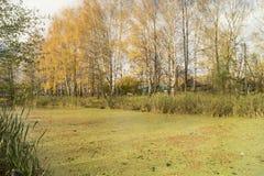 Paisaje rural con la charca en el tiempo del otoño del año Fotografía de archivo libre de regalías