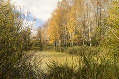 Paisaje rural con la charca en el tiempo del otoño del año Foto de archivo libre de regalías