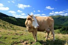 Paisaje rural con la vaca Fotografía de archivo
